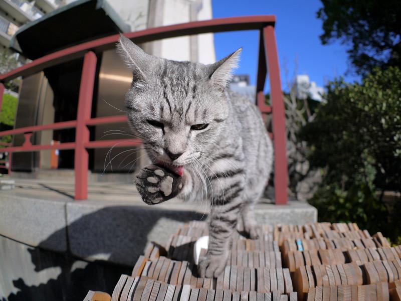 卒塔婆の上でベロを出すサバトラ猫1