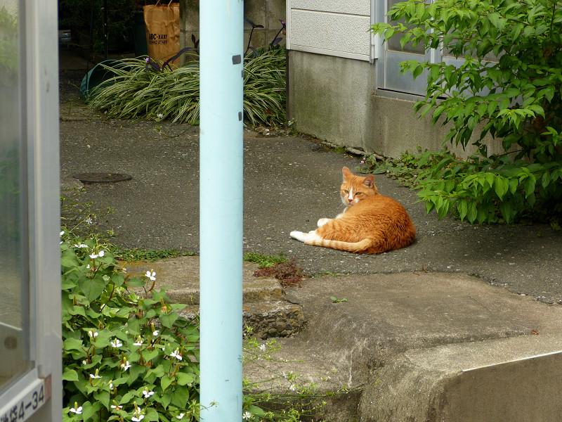 細い路地の茶白猫1