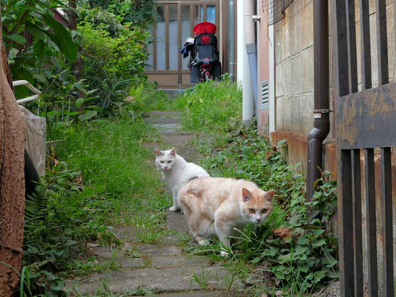 戻り始めてる猫たち2
