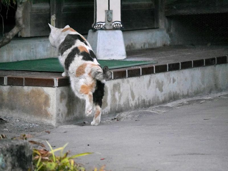 立ち去る薄い柄の三毛猫2
