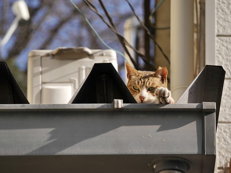 三角屋根のキジ白猫2