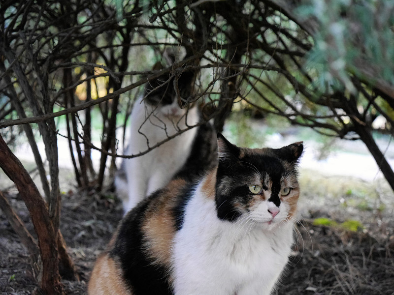 低木植え込みと猫2