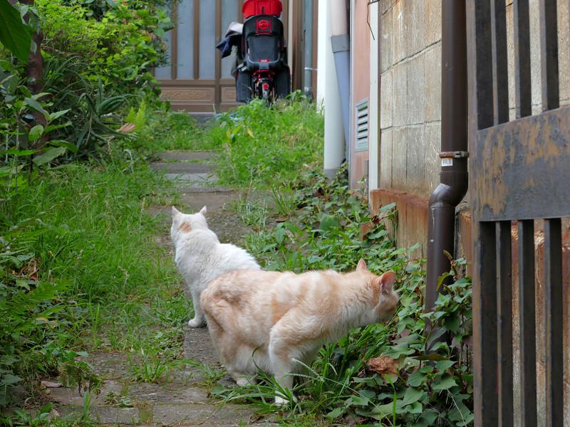 戻り始めてる猫たち3