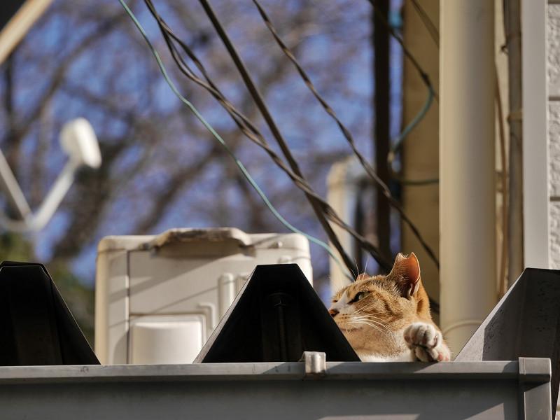 三角屋根のキジ白猫3