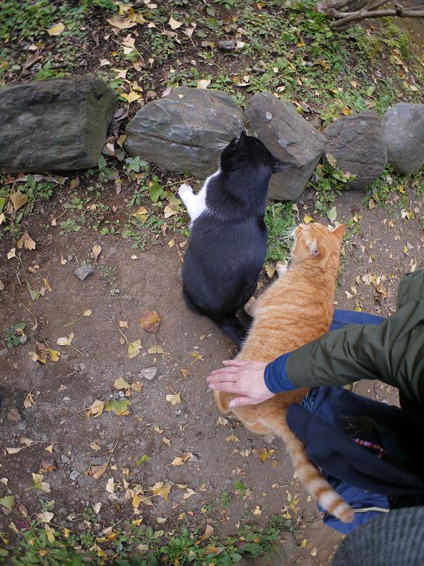 仲が良い茶トラと黒白猫1