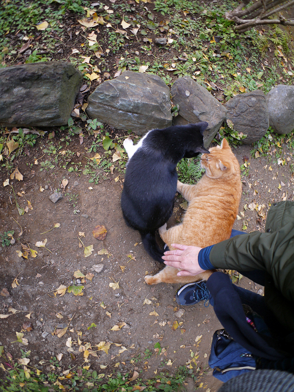 仲が良い茶トラと黒白猫2