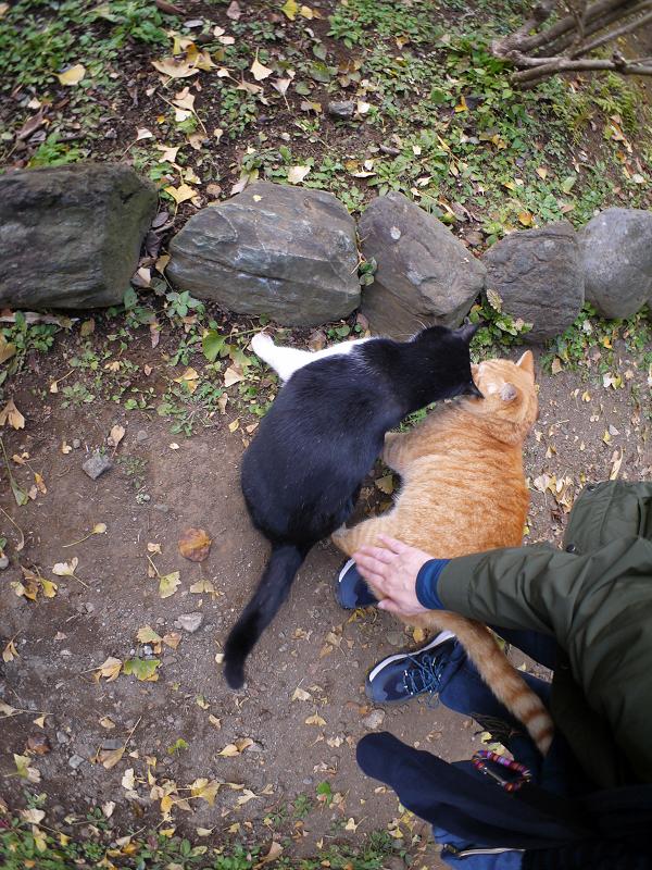 仲が良い茶トラと黒白猫3