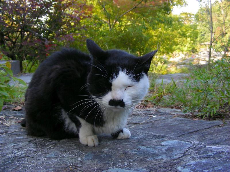 岩場の黒白猫1