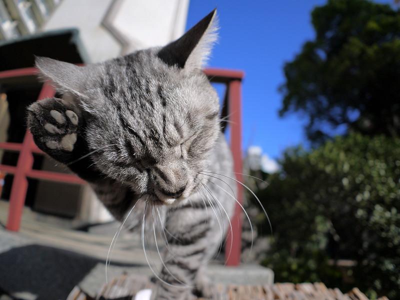 卒塔婆の上で手をなめるサバトラ猫1