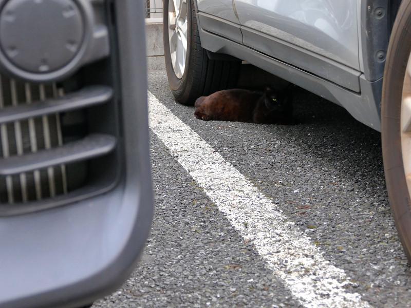 車の下の黒猫1