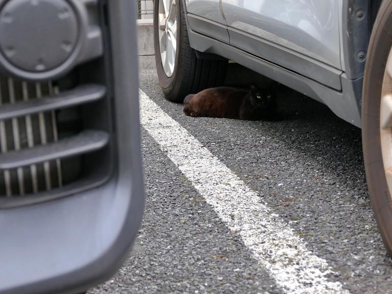 車の下の黒猫2