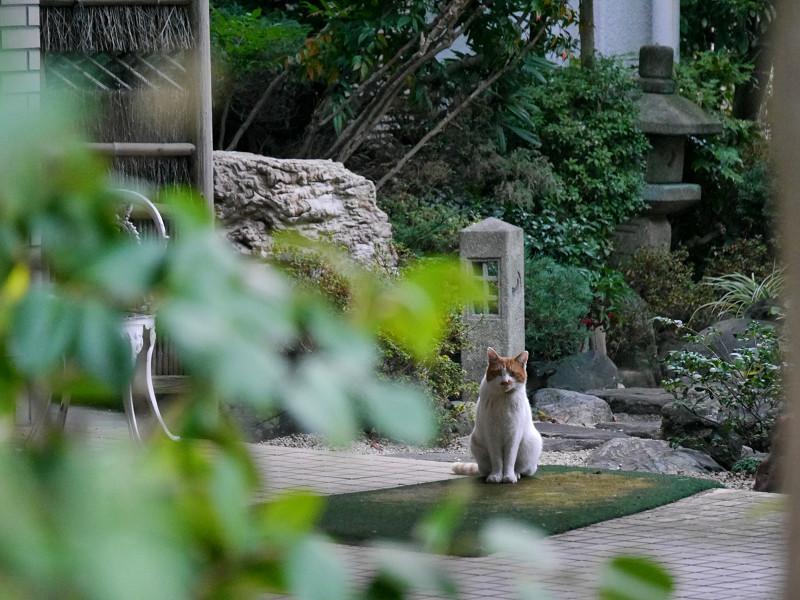 お屋敷の庭と茶白猫