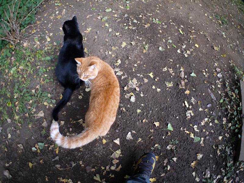 仲良し猫の後ろ姿1