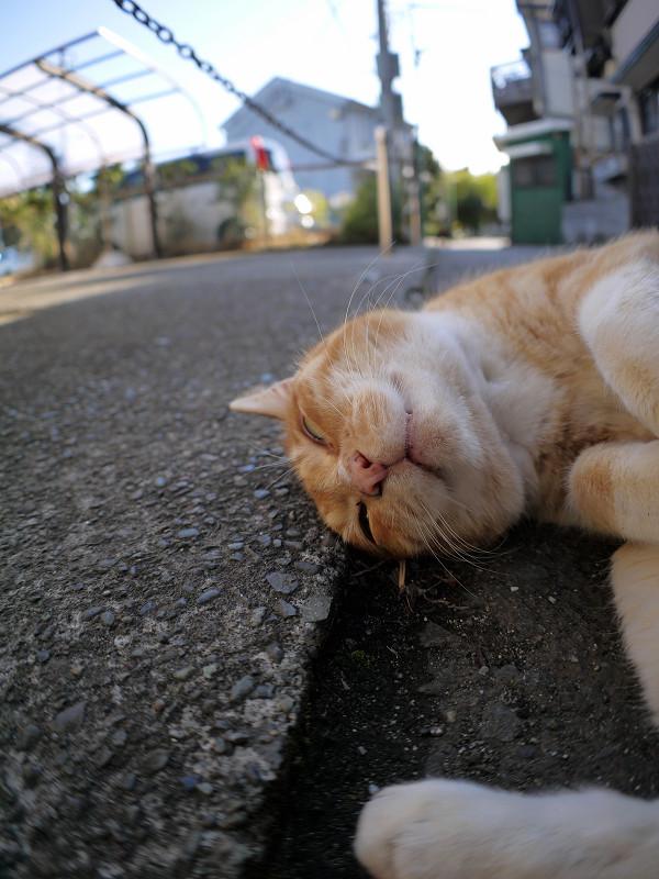 足元で丸くなる茶白猫2