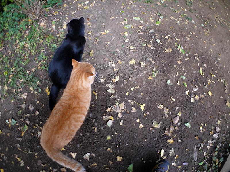 仲良し猫の後ろ姿2