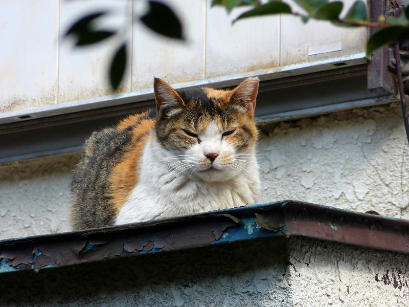 庇で香箱の三毛猫3