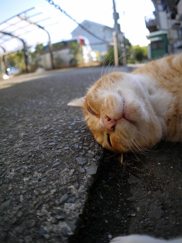 足元で丸くなる茶白猫3