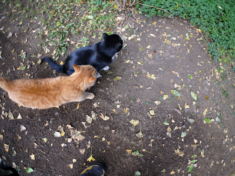 仲良し猫の後ろ姿3