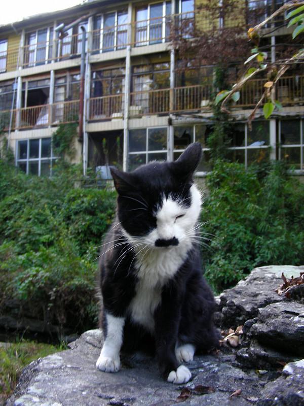 廃屋前の黒白猫1