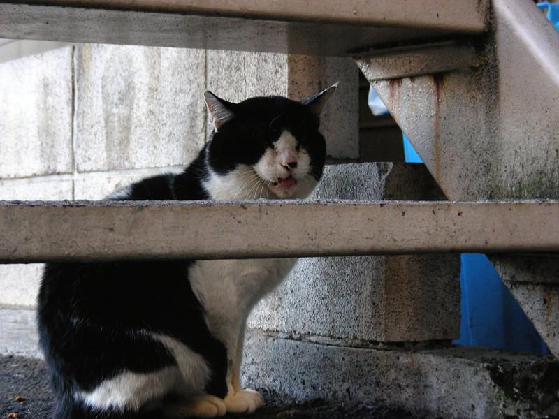 階段と黒白猫2