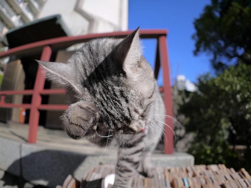 卒塔婆の上で手をなめ続けるサバトラ猫1