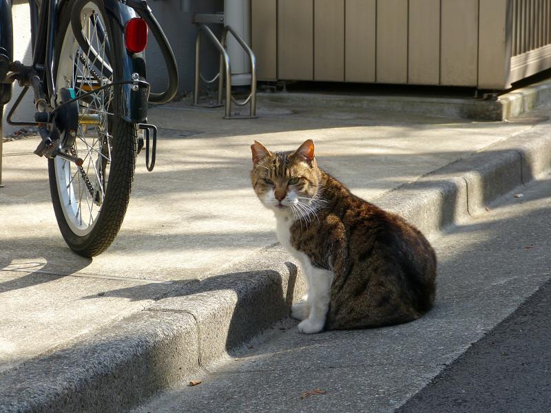 路地で座ってたキジトラ猫1