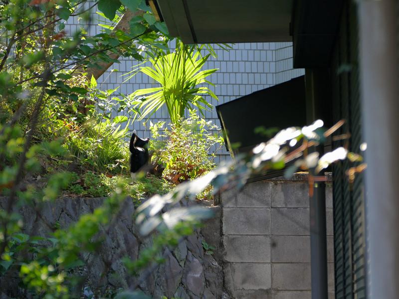 斜面を見ている黒白猫1