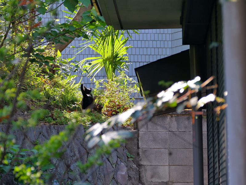 斜面を見ている黒白猫2