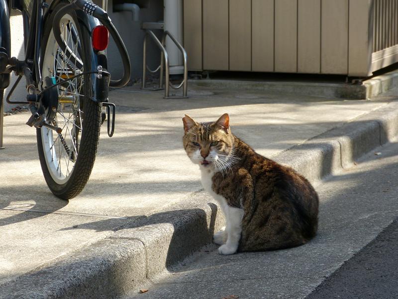 路地で座ってたキジトラ猫2
