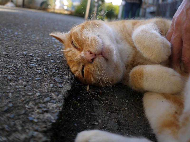 丸くなって恍惚顔の茶白猫2