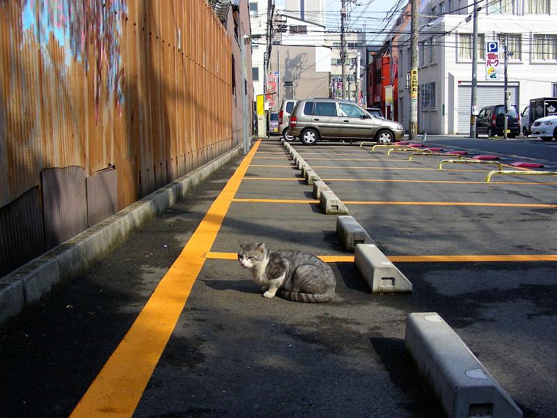 駐車場で座ってるグレー白猫1