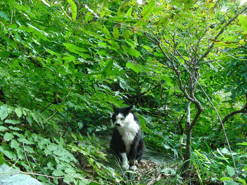 緑の中の黒白猫1