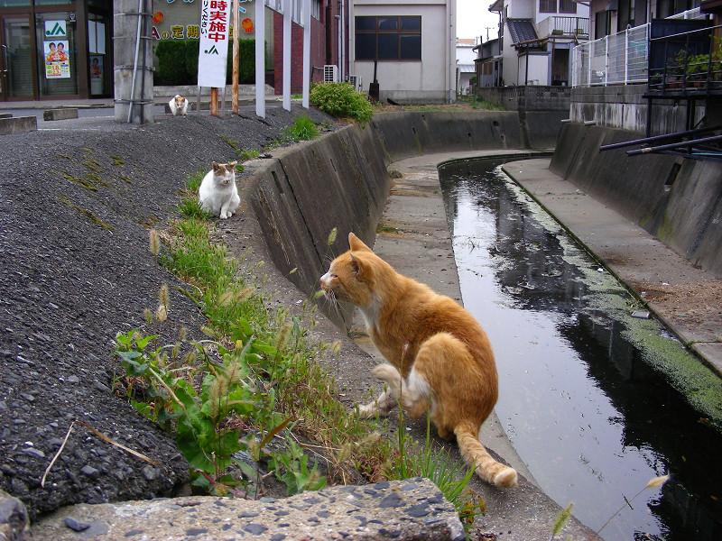 川と猫たち1