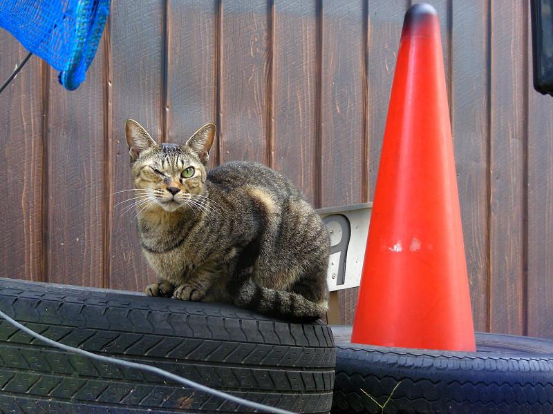 古タイヤに乗ってるキジトラ猫1