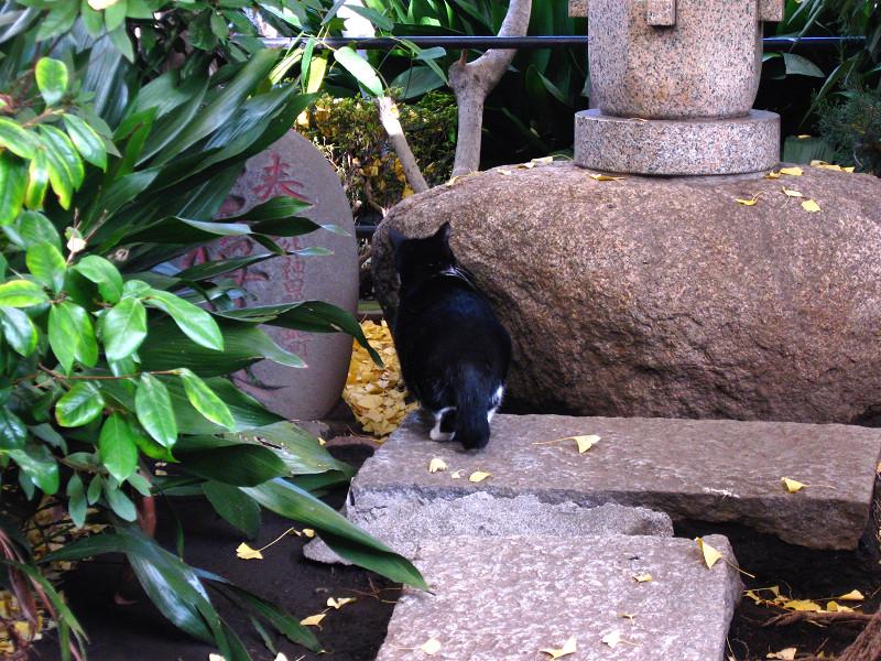 石碑などと黒猫