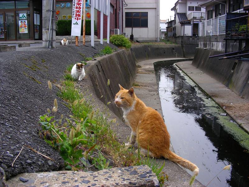 川と猫たち2