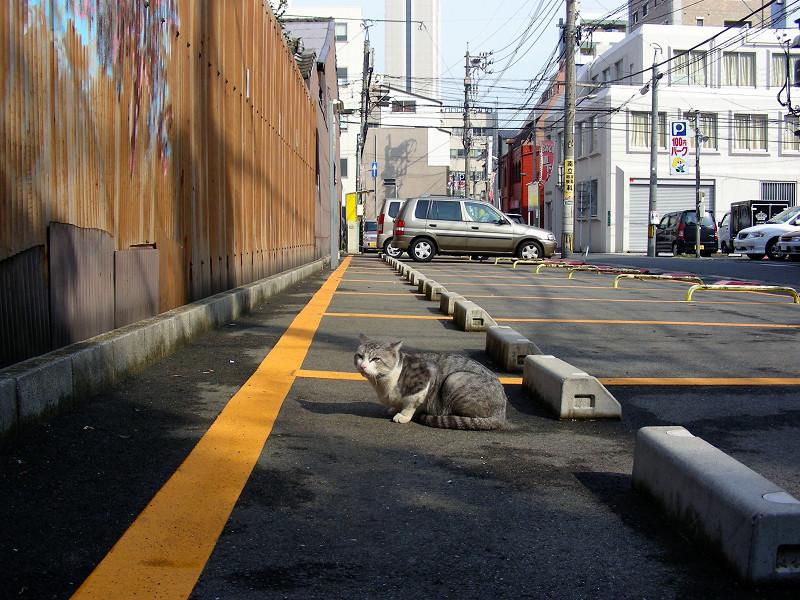 駐車場で座ってるグレー白猫3