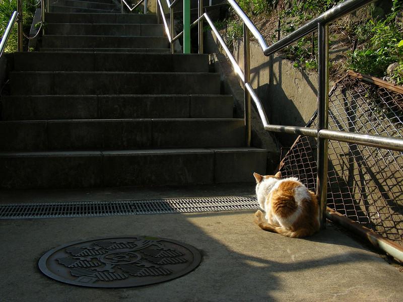 階段の端を歩く白茶猫3