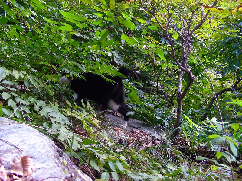 緑の中の黒白猫3