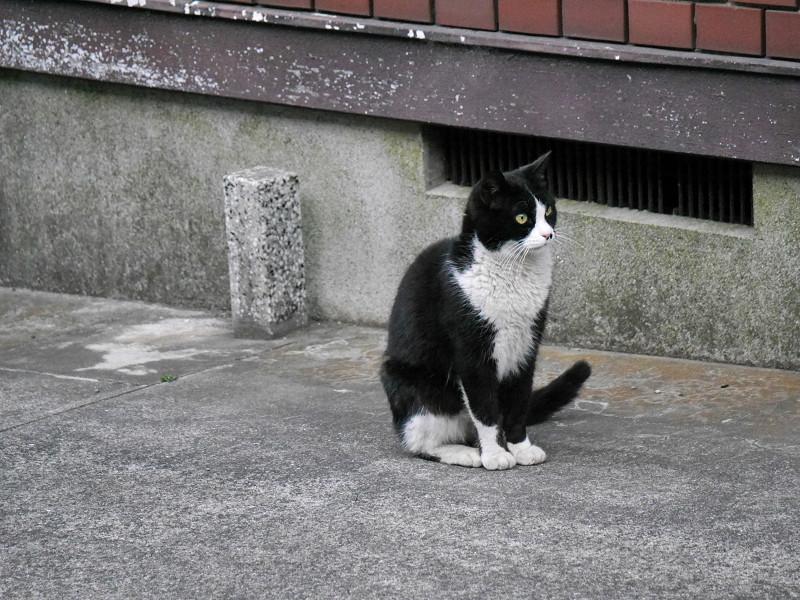 不愉快顔の黒白猫1