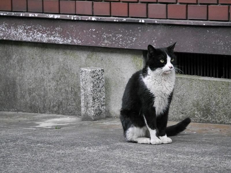 不愉快顔の黒白猫2