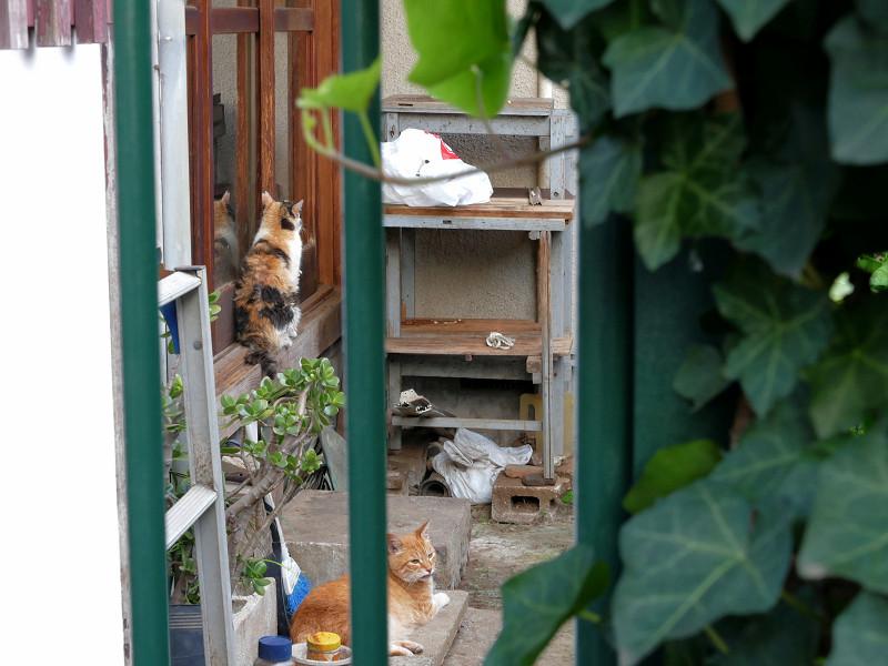 民家ガラス戸の猫たち3