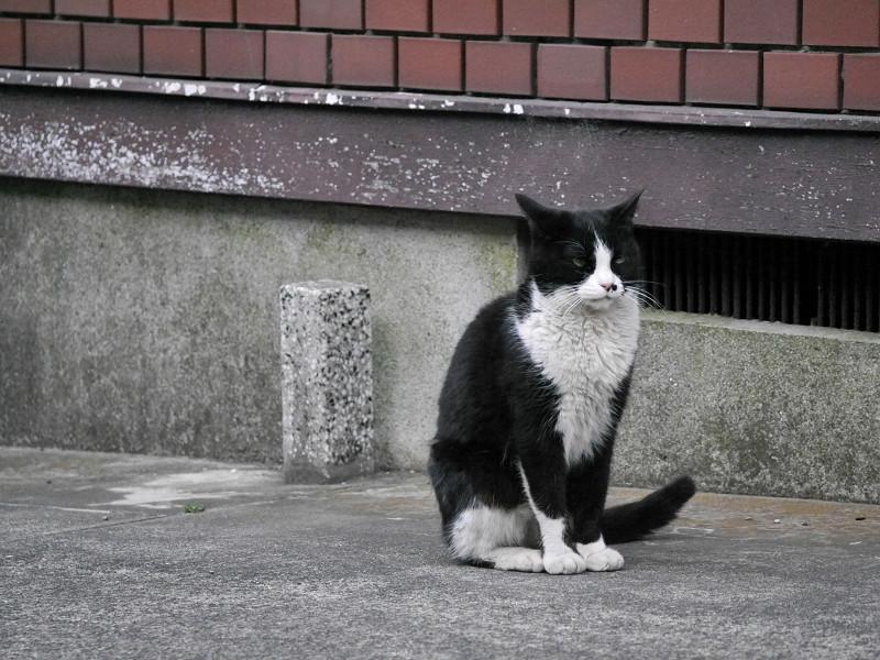 不愉快顔の黒白猫3