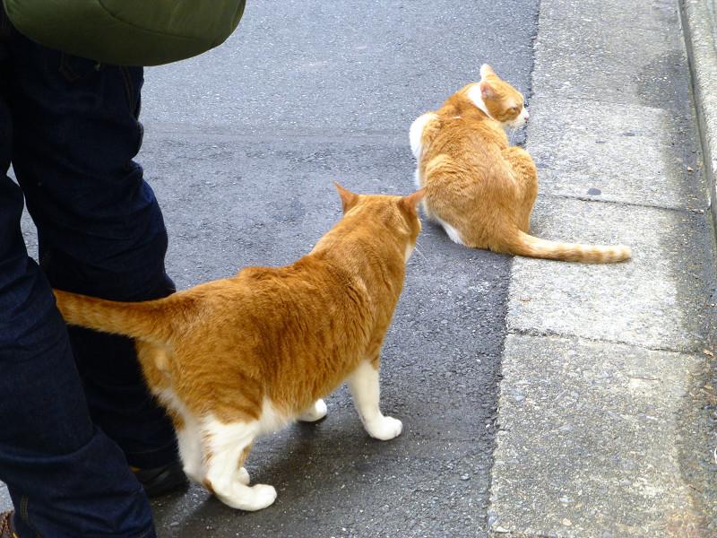 少しだけ触れ合った茶白猫1
