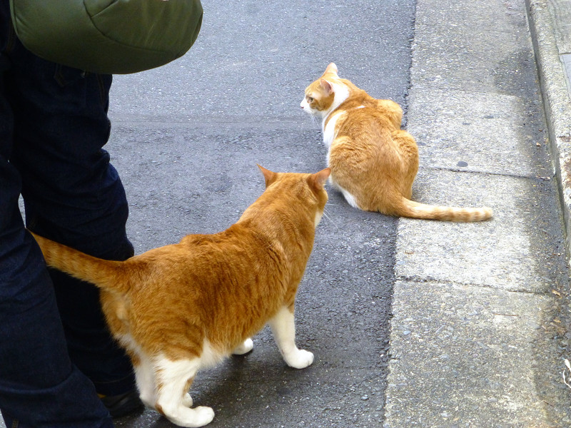 少しだけ触れ合った茶白猫2