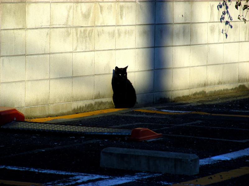 壁際の黒猫1