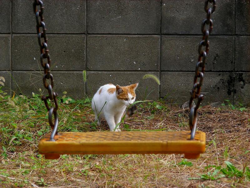 ブランコの向こう側のシロ茶猫1