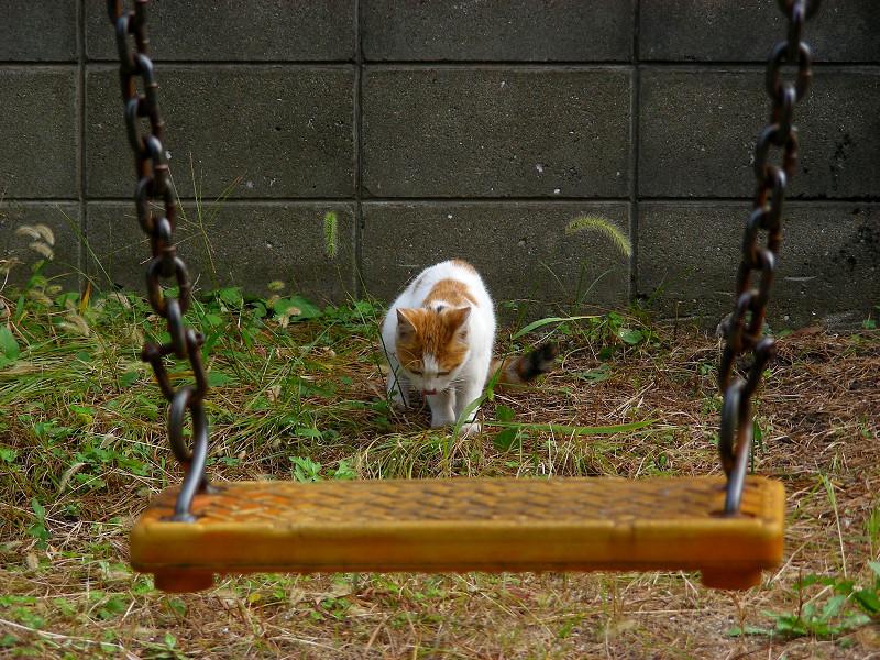 ブランコの向こう側のシロ茶猫2