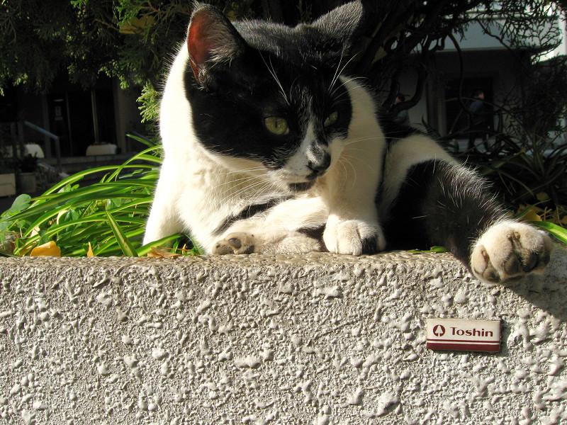 大型プランターと白黒猫2