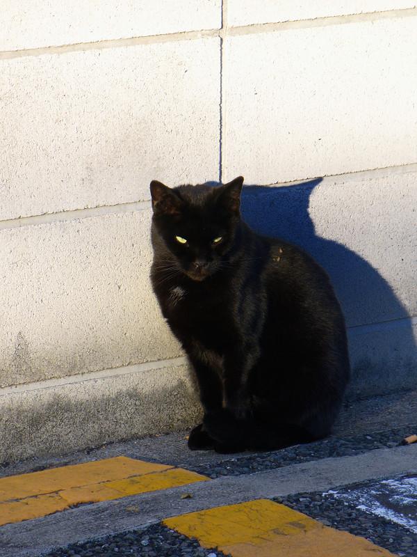 壁際の黒猫2